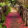Healing into wholenes profile image