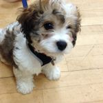 Puppy School Solihull & BestBehaviour profile image.