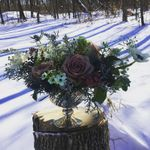 Vera & Buck Floral Studio and Farm LLC profile image.