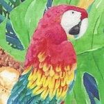 Maven Macaw Events profile image.