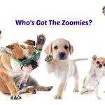 ZoomieDogs profile image.