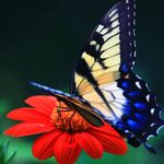 Vibrant Living Transformational Life Coaching profile image.