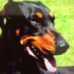 Spesmagna Boarding Kennels profile image.