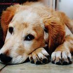 Dog Walking Lancashire And Pet Services profile image.