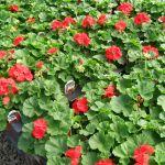 dg flowers profile image.