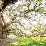 Elbow Tree Christian Counseling, LLC profile image.