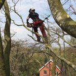 MWU Tree Services profile image.