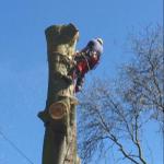 Wold Tree Works Ltd profile image.