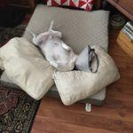 Paws United Pet Care profile image.