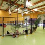 Barkingham Pet Hotel California profile image.