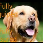 FurN'Fun profile image.