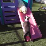 Canine Courtyard profile image.