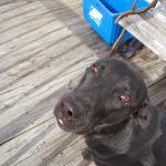 LukEli K9 Dog Training Behavior Modification profile image.