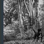 The Perfect Puppy Company profile image.