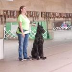 Dog Training Club of Dallas County profile image.