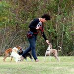 Ann Becnel Companion Dogs, LLC profile image.