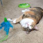 Five Star Critter Care profile image.