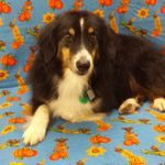 Professional Pet Care profile image.