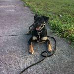Greater Boston Dog Training profile image.