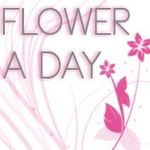 Flower A Day profile image.