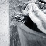 Craig Allen Photography profile image.
