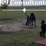 K9 Consultants profile image.