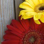 Double Daisy Photography profile image.