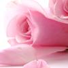 Peachtree Petals profile image