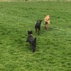 Southgate Dog Walkers