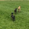 Southgate Dog Walkers profile image