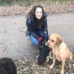 Southgate Dog Walkers profile image.