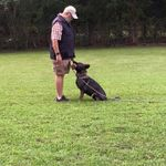 Carlas perfect obedience training profile image.
