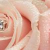 Mrs Flower Potts' Florist profile image