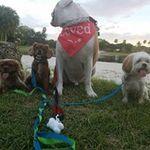 Mayte's Dog Boarding and Dog Sitting profile image.