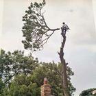 Wold Tree Works Ltd