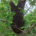 GH pest control  profile image.