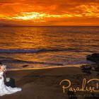 A Paradise Dream Wedding logo