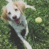 Duke's Dogs Herts profile image