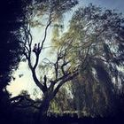 L Dempsey Tree & Garden care