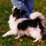 Sunshine Obedience School-Gerianne Darnell profile image.