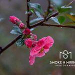 Smoke N Mirrors, LLC profile image.