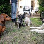 DogWalkersN8  BEHAVIOUR & TRAINING profile image.