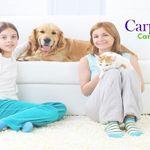 Carpet Zen profile image.