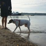 Peace & Pups Dog Walking profile image.