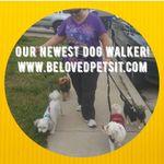 BeLoved Pet Sitting profile image.