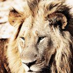 Jeff Crass Photography profile image.