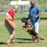Global K9 Services, LLC profile image.