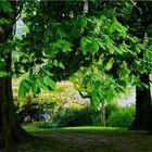 Beacons Tree Services