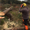 Beaver Tree Services Calderdale Ltd profile image