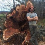 Lossie Tree Care profile image.